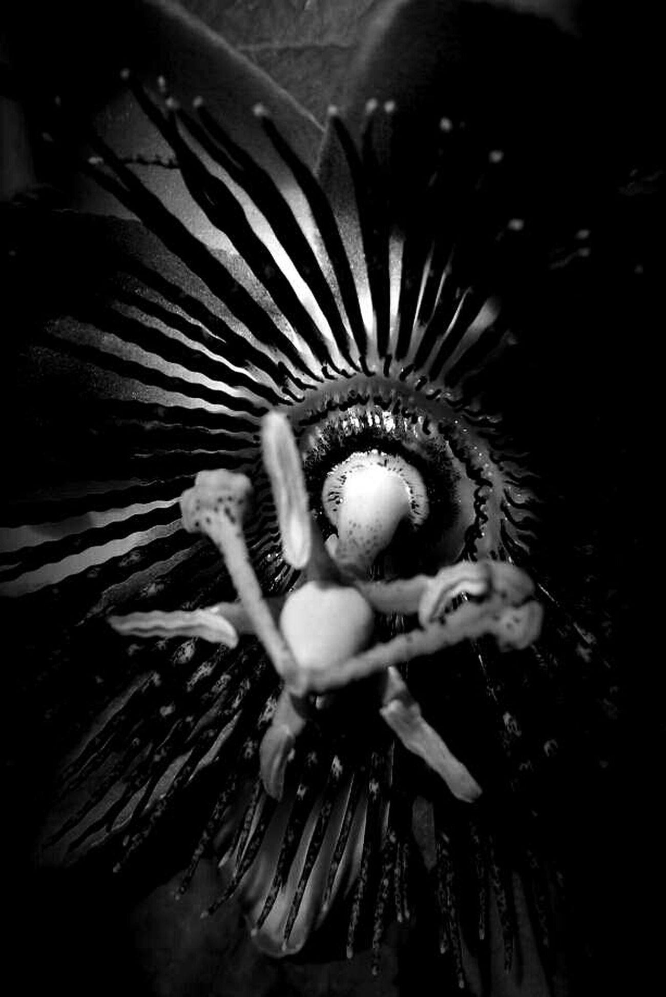Black And White Blackandwhite Monochrome Darkness And Light Nature_ Collection  Flower Flowerporn Passiflora Eye4black&white  Black & White Black&white Bw_collection Light And Shadow The Devil's In The Detail Naturelovers