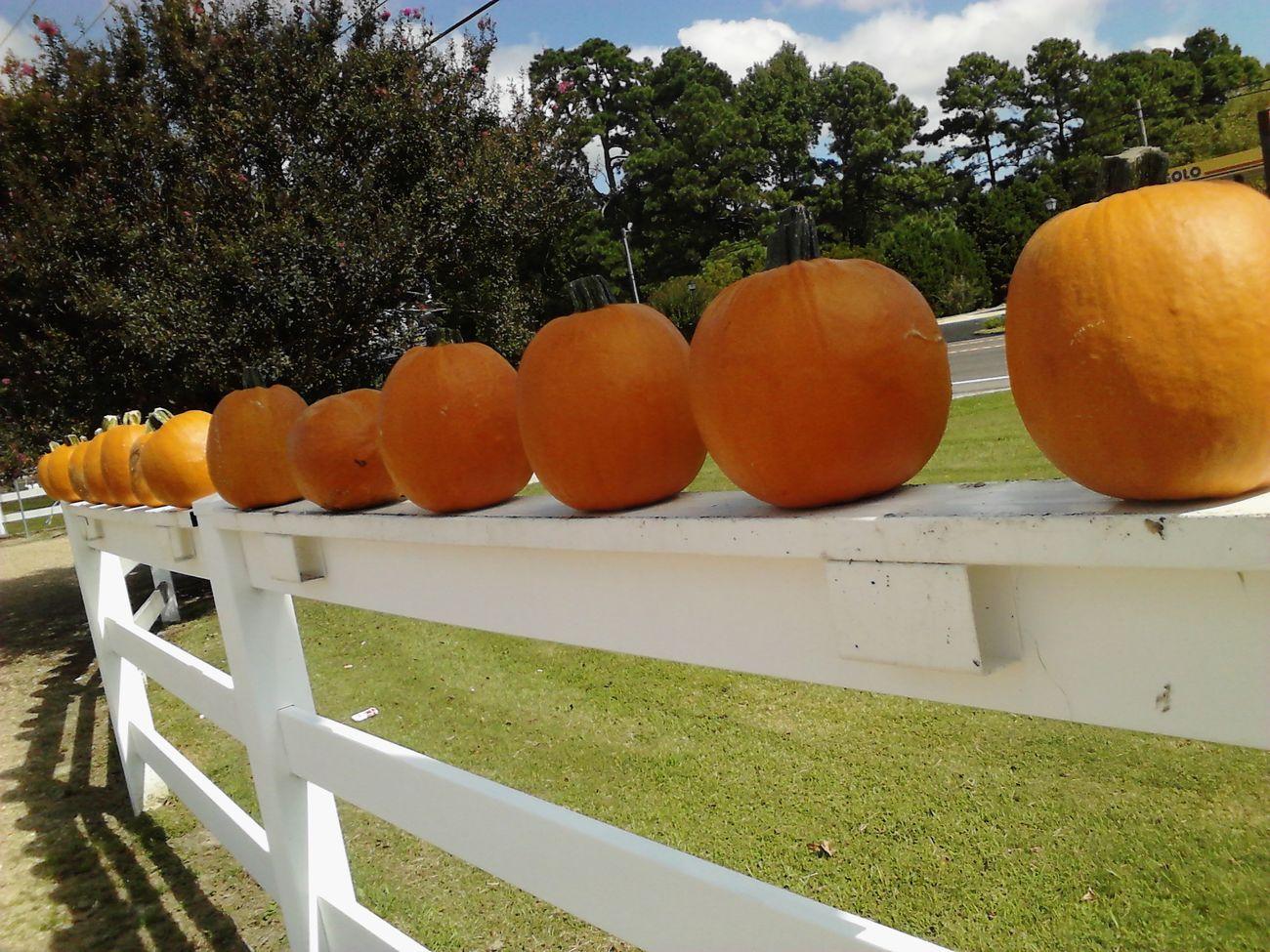 Beachbound Pumpkins Farm Markets Fresh Produce