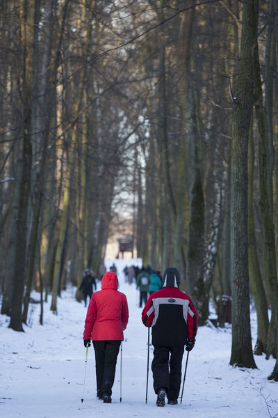 06.01.2017 The Stefan Starzyński Kabaty Woods Nature Reserve Cold Temperature Couple Daily Life Day Forest Kabaty Nature Nature Nordic Walking Outdoor Activity Outdoors Park People Poland Reserve Snow Starzyński Stefan Warsaw Winter WoodLand Woods