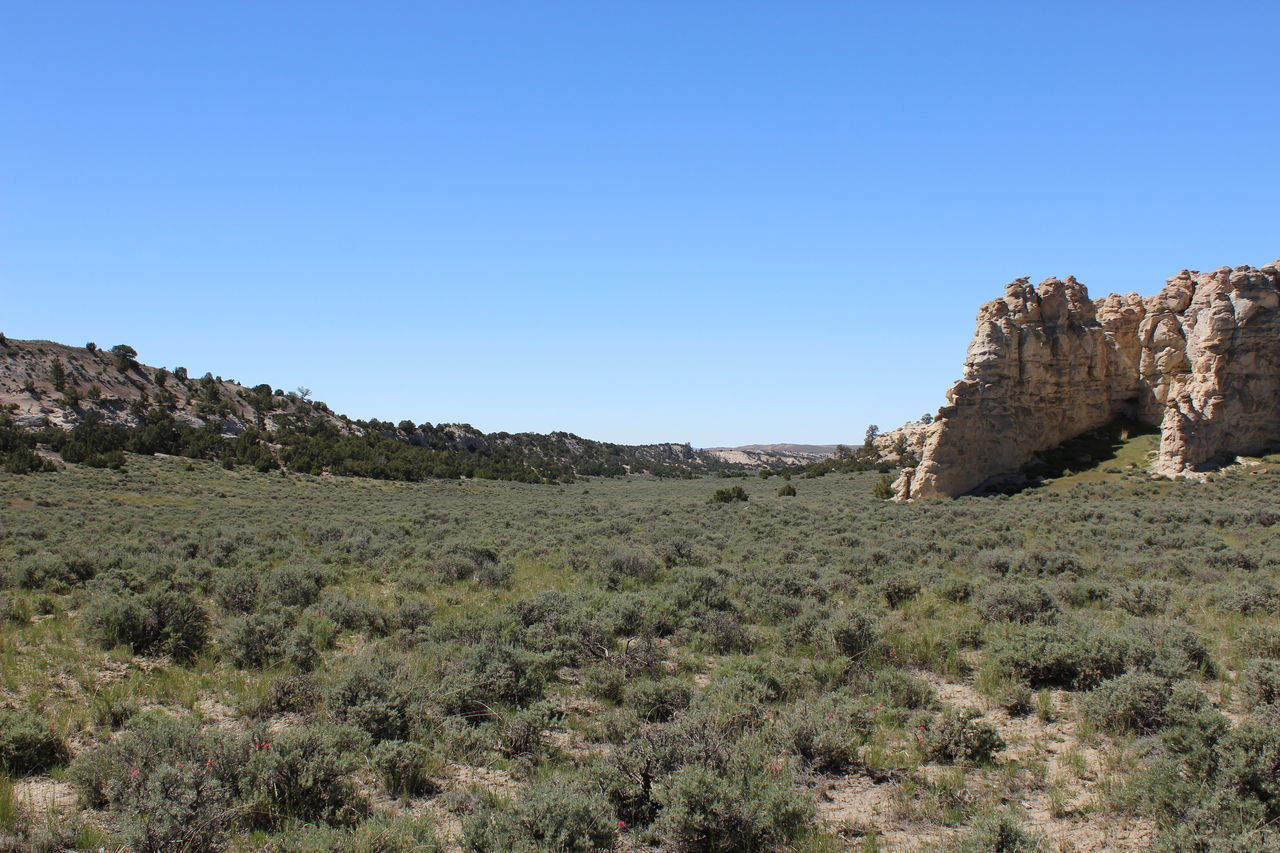 Wyoming Wyoming Landscape Distant Background Rock Formation Sagebrush Juniper Trees Indian Paintbrush Flowers Valley Vastness Trees And Sky