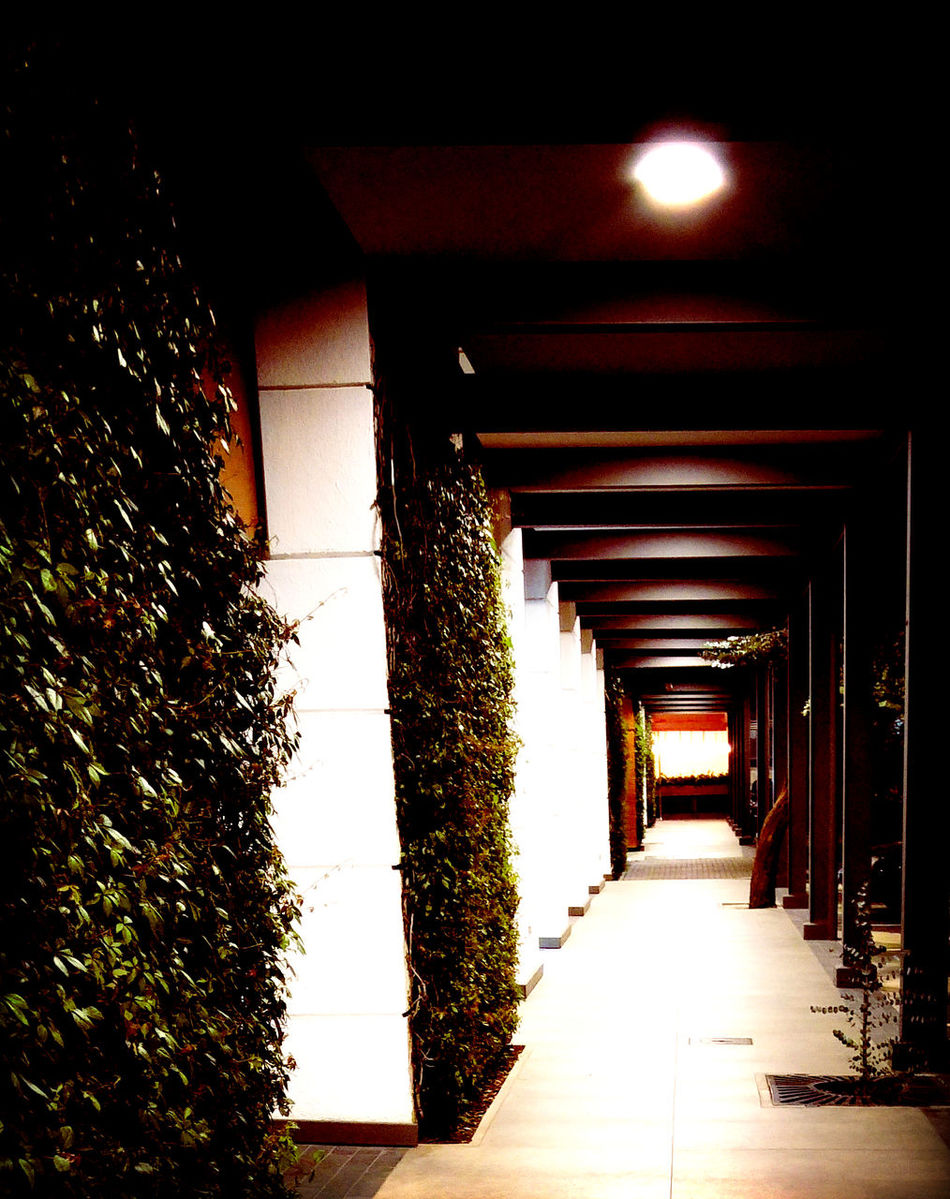 Architectural Column Architecture Built Structure Climbers Climbers And Creepers Columns Columns And Rows Columns Perspective Creepers Dark Hallway Hallway Hallway Lights Illuminated Illuminated Hallway Perspective The Way Forward Wall Climbers Walls Fine Art Photography Fine Art Lomography Streetphotography Street Photography Urban Photography Urban Exploration