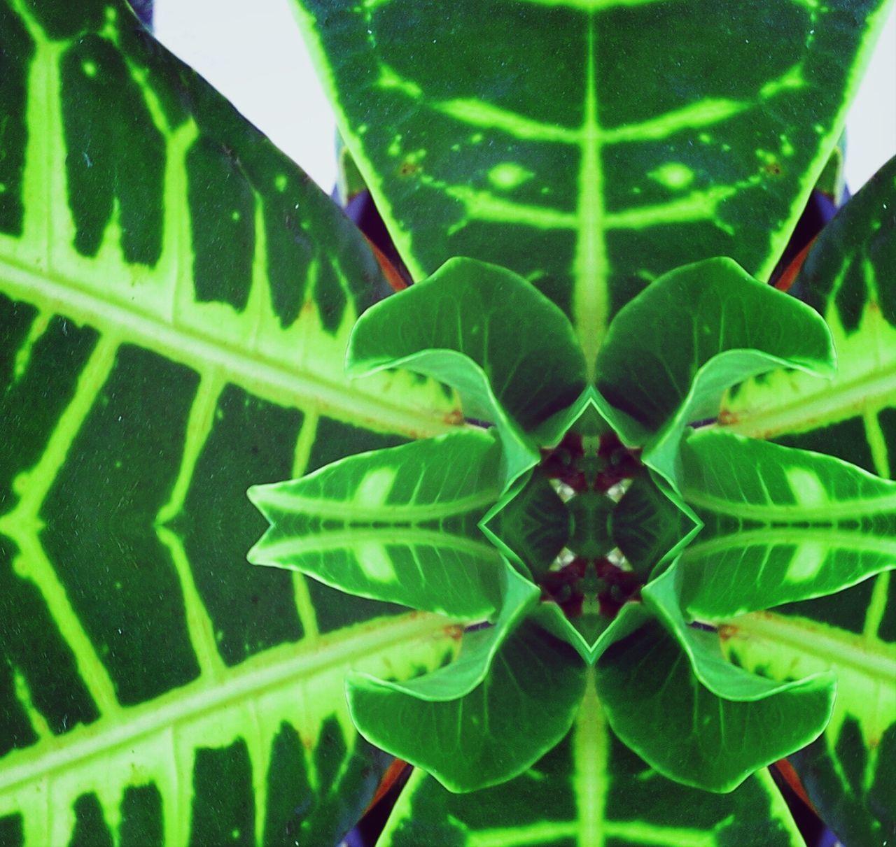 Digital Composite View Of Plant