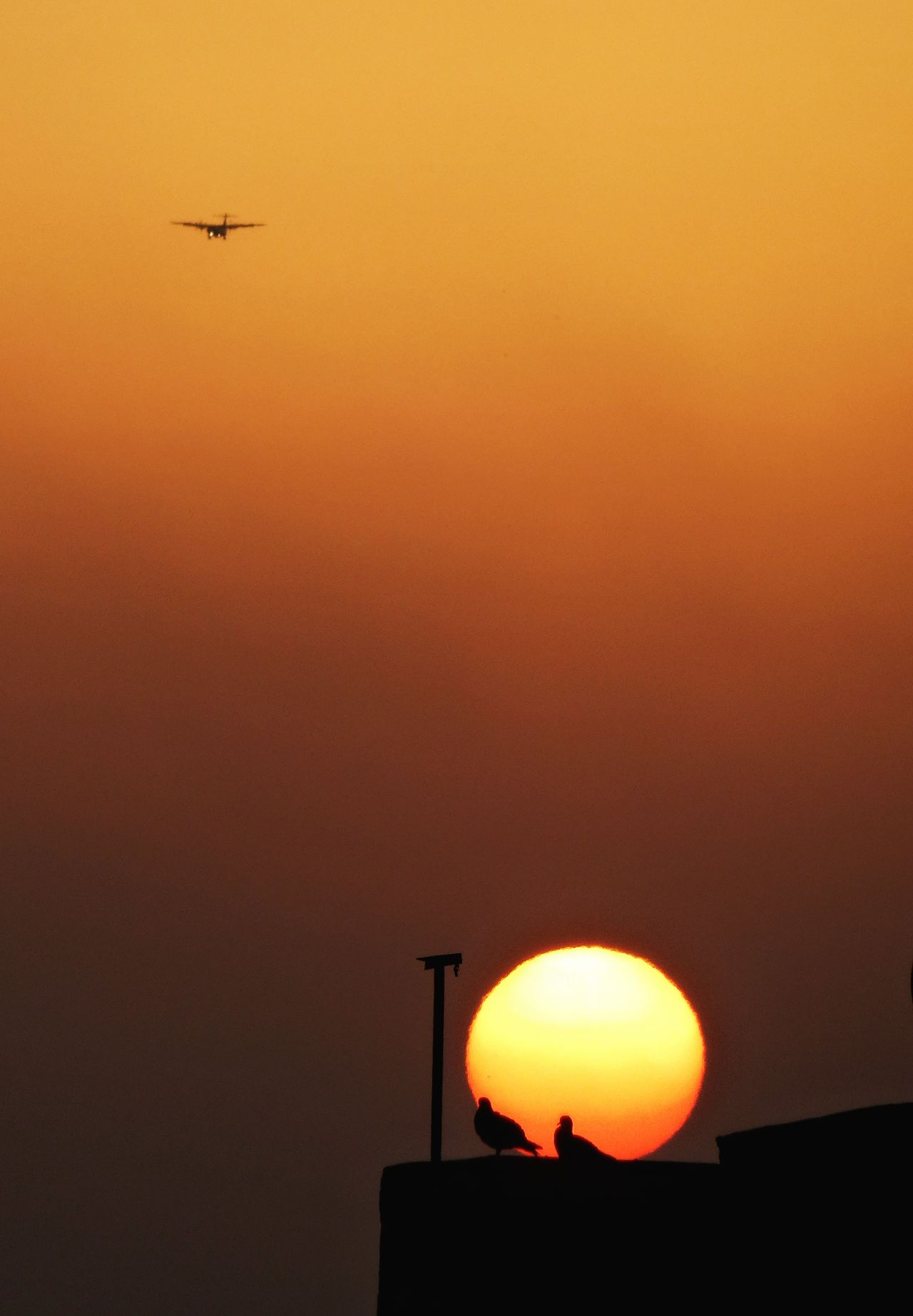 Sunrise Beauty In Nature Airplane Air Vehicle Flying Silhouette Nature Outdoors Sky Birds Orange Color Pigeon Pose Bird Sun