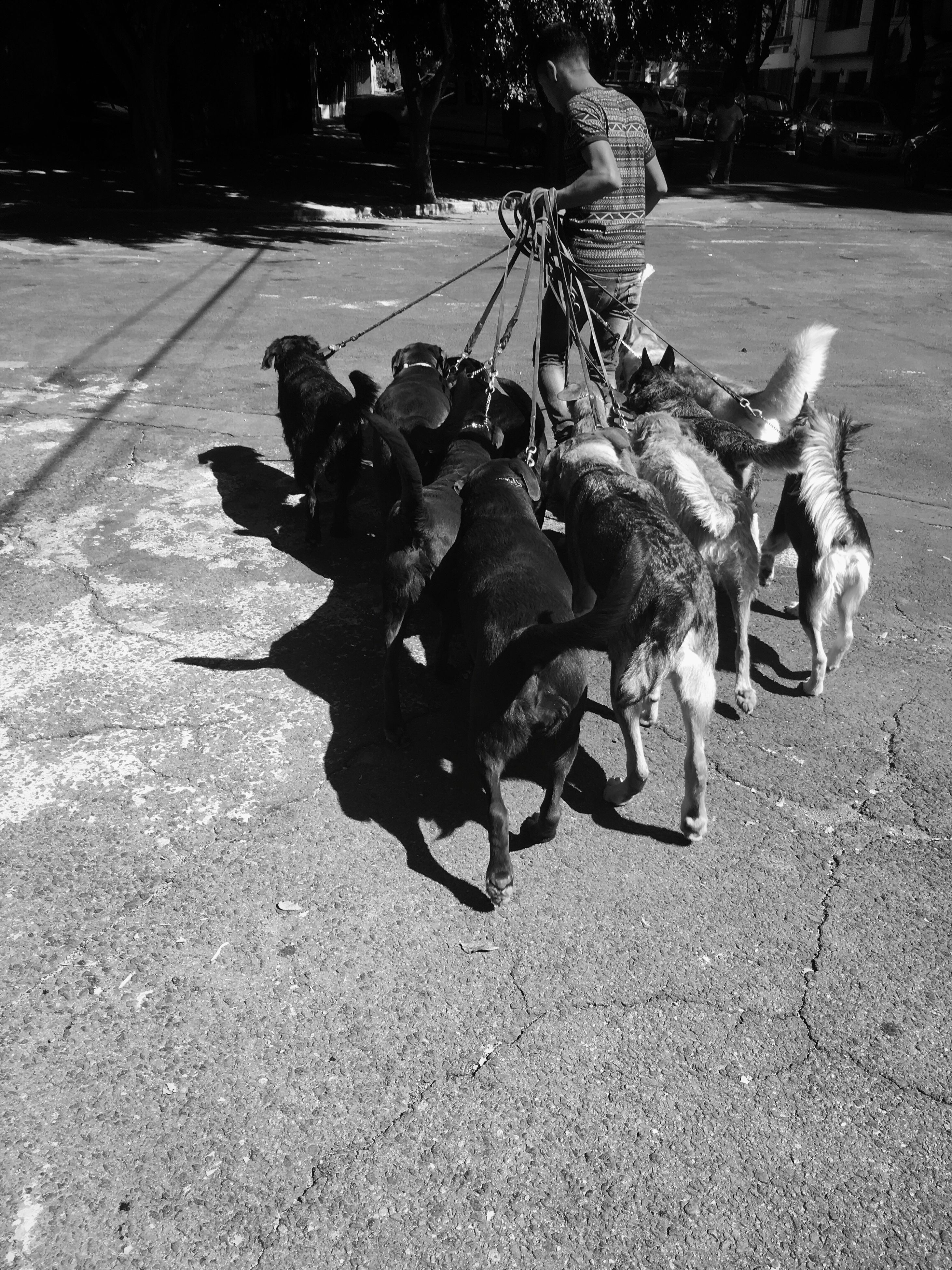 street, road, full length, domestic animals, mammal, day, nature, zoology