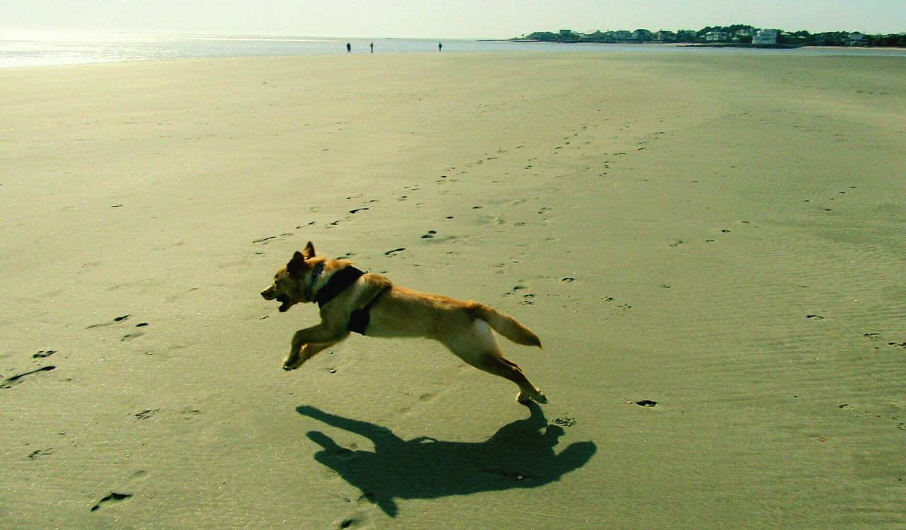 Beach Dog Sand Pets Mammal Nature Outdoors Water Day Happy Dog Freedom Out The Gate Rocking Horse Dog Paw Print Beach Puppy Sea One Animal Animal Themes Domestic Animals Horizon Over Water Running Sprinting Isle Of Palms Love To Run Live For The Story