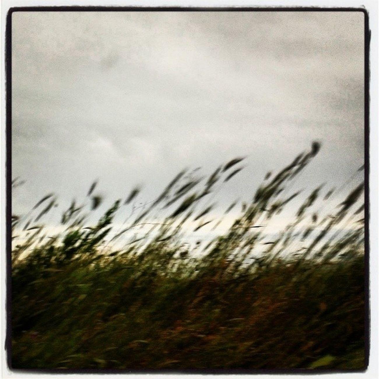 ... Maestrale Sardegna Wind Terra Sarda  Remember
