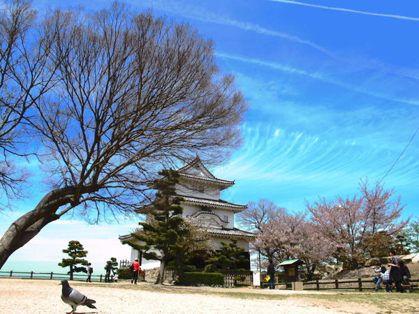 marugame castle Japan Japanese Castle Japanese Culture Ancient Civilization Architecture Beauty In Nature Built Structure Day History Nature Outdoors Sky Travel Travel Destinations Tree