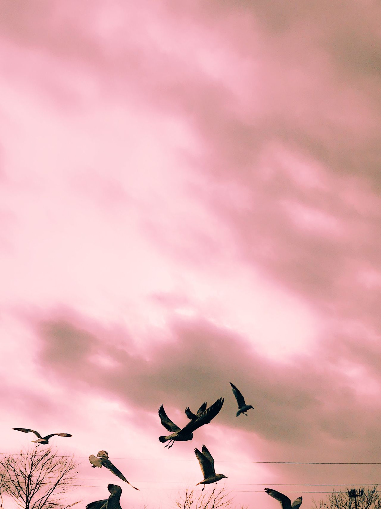 Nature Low Angle View Pink Color No People Sky Flying Bird Beauty In Nature Animal Themes Cloud - Sky Outdoors Flower Animals In The Wild Fragility Tree Day Pink