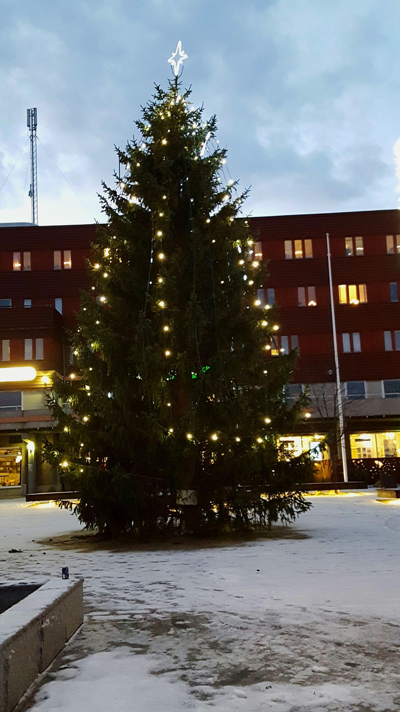 Tree Outdoors Christmas Christmas Tree Christmas Lights Sweden Firtree Lights Tradition Sky Greenwinter