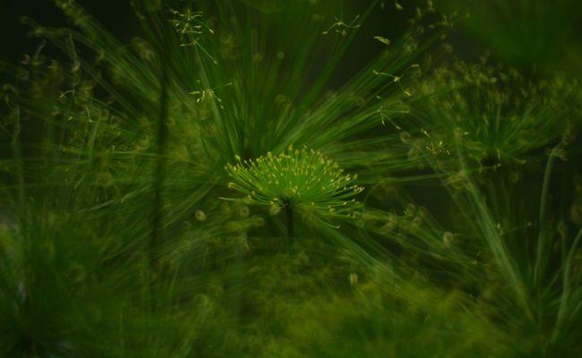 Close Up Close-up Maximum Closeness Miracle Of Nature Natural Beauty Wonder Wonder Of Life Wonder Of Nature Wonderful Wonderful Day