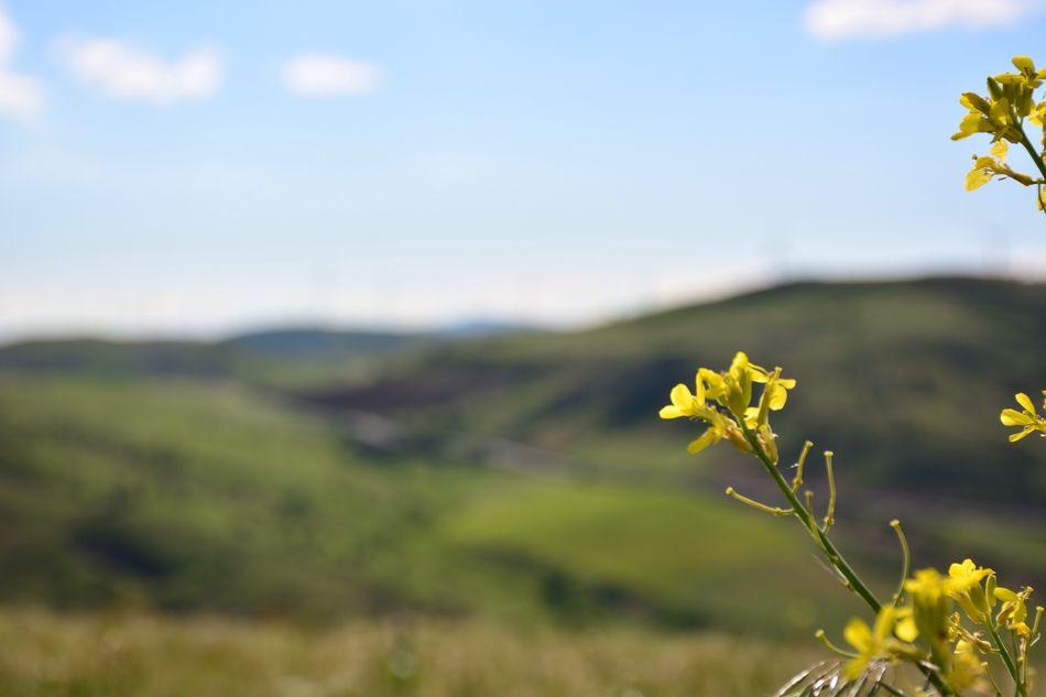 Tokat çiçek Yeşillik Traveling Travel Gezmeler
