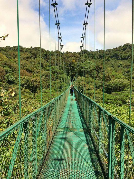 Hanging Bridge Bridge Green Cloud Forest Hanging Out Costa Rica