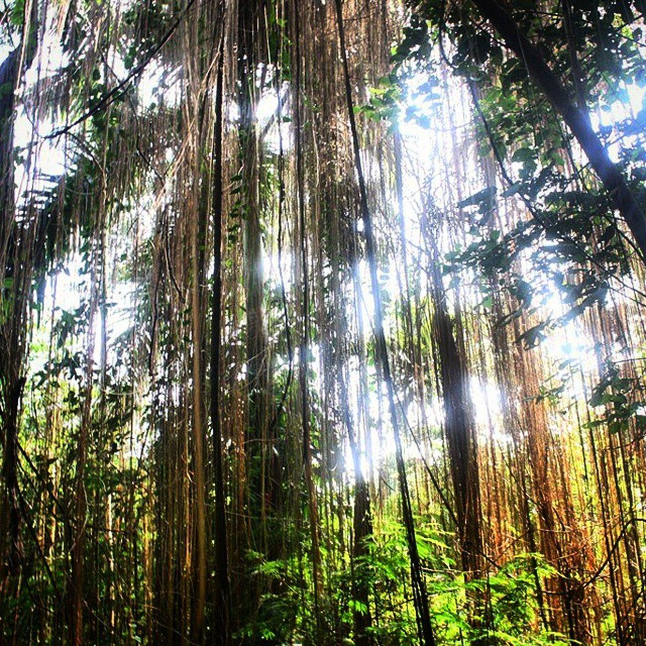 Hutankota BabakanSiliwangi Nature BelajarFoto BandungMasihIndah