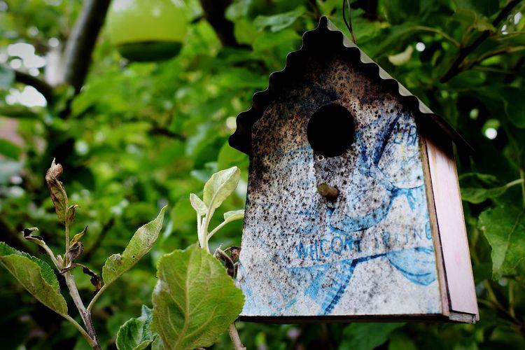 Beautiful Nature Backyard Garden Photography Outdoors Birdhouse Close-up Tree 🌿☘️🌲🍃 NIKON D5300