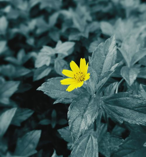Nature Yellow Flower Head Petal Plant Beauty In Nature