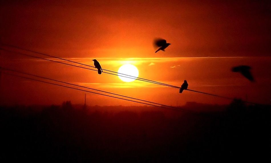 Birds On Wire Sunset Sunset #sun #clouds #skylovers #sky #nature #beautifulinnature #naturalbeauty #photography #landscape Flighing High Flighing Birds Check This Out Birds Of EyeEm