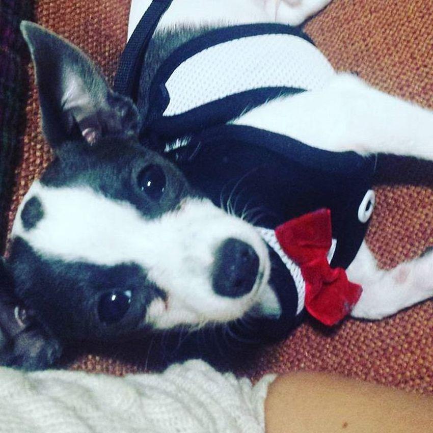 MOOMOO LYNN Adorable Puppy Lostlynnworld Bowtie Studmuffin Baby Soadorable Doll