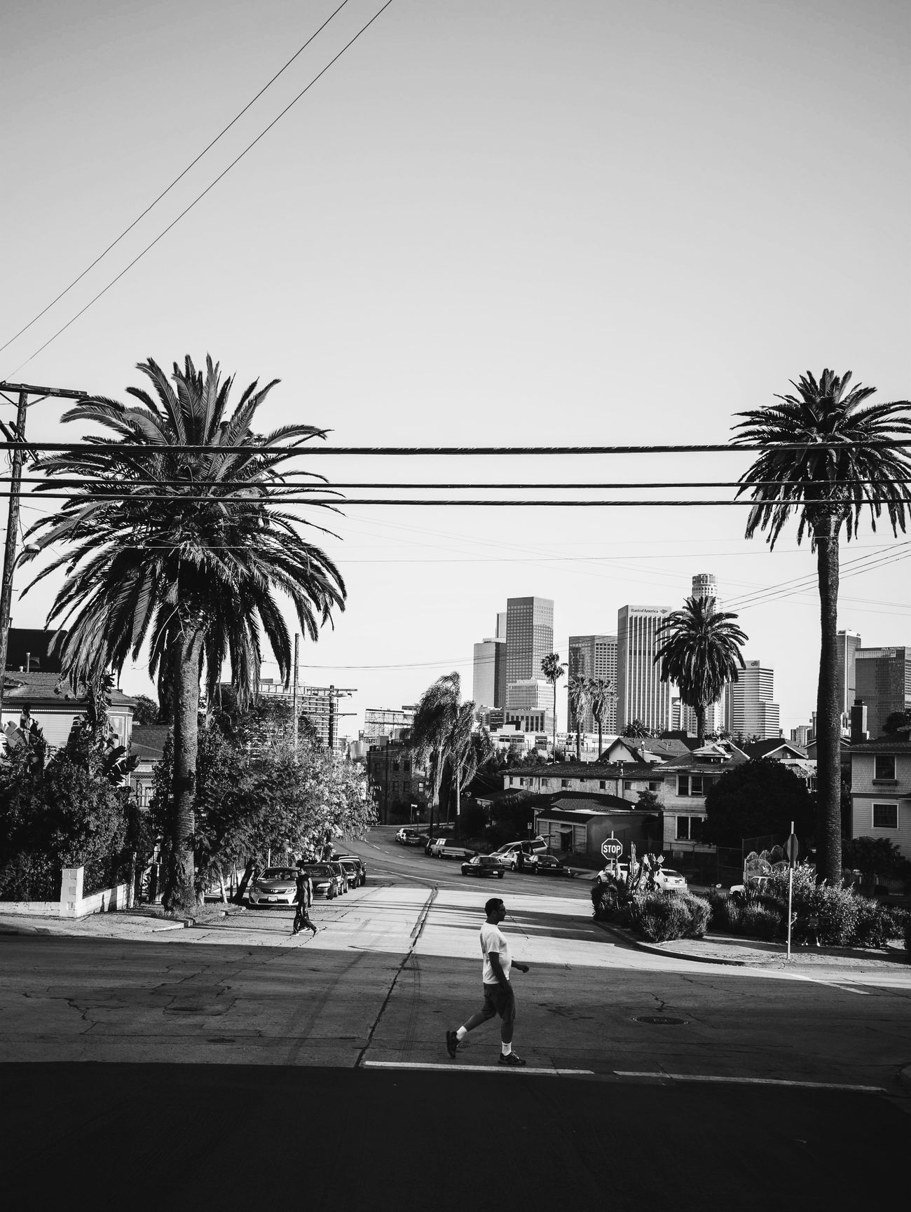 The Street Photographer - 2017 EyeEm Awards The Architect - 2017 EyeEm Awards MonochromePhotography LosAngelesCity Monochrome _ Collection WeekOnEyeEm EyeEm Best Shots Blackandwhite Palm Tree City City Life Outdoors Built Structure Building Exterior People Urban Exploration Urban Photography Streetphotography Urban Perspectives Real People Street Photography The Photojournalist - 2017 EyeEm Awards StillLife Streetphotography_bw