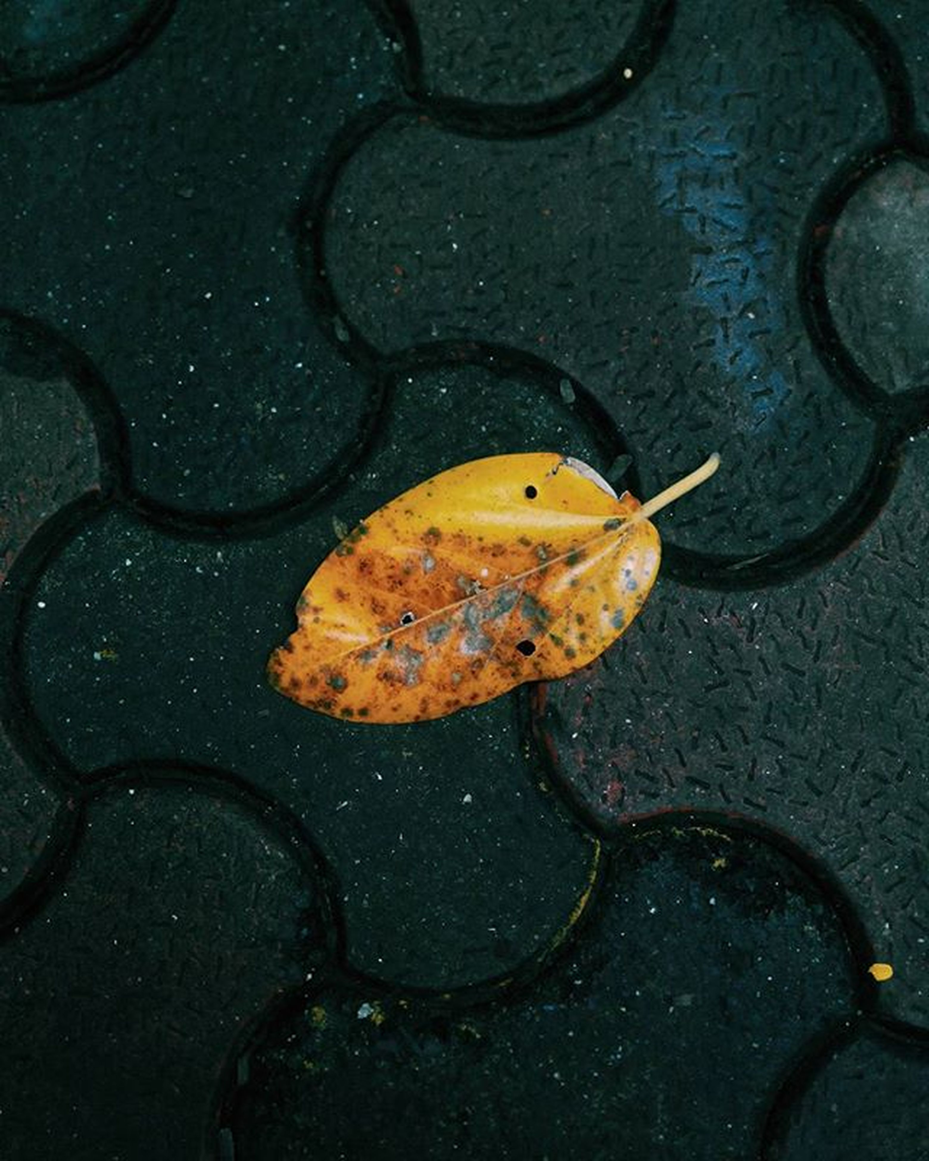 yellow, high angle view, close-up, orange color, autumn, nature, dry, leaf, outdoors, no people, day, change, fragility, fallen, natural pattern, directly above, textured, season, sunlight, pattern
