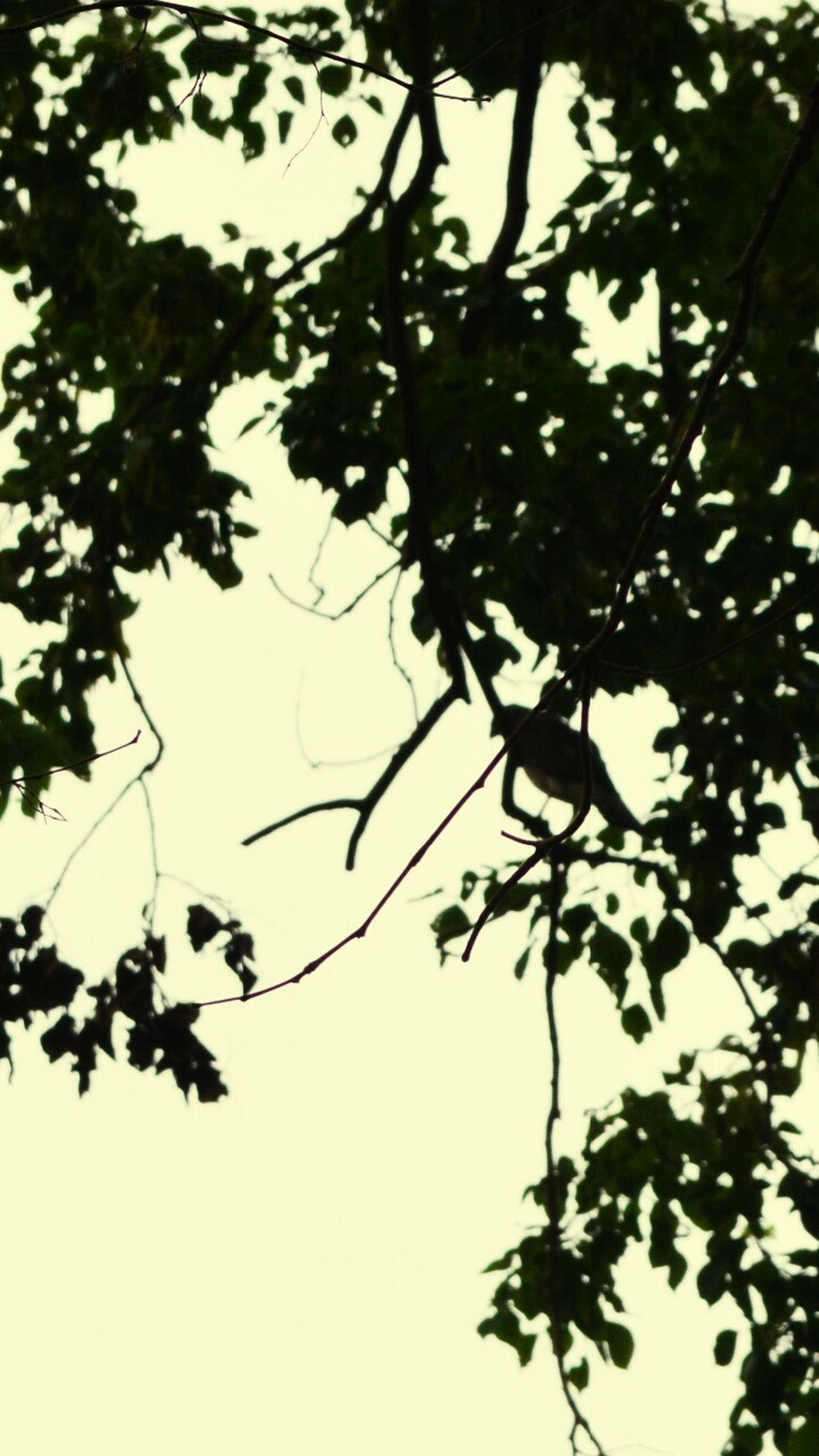 Tree Branch Leaf Low Angle View Outdoors Silhouette No People Day Nature Bird Animal Themes Sky Bird Life In The Worldwide Photography Of The Day