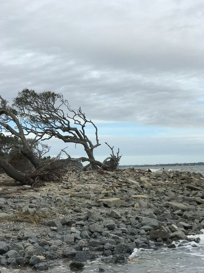 Sky Nature Storm Destruction Aftermath Fallen Uprooted Rocks Stone Landscape Cloud - Sky No People Rock - Object Day Outdoors Tree Branch Horizon Over Water Dead Tree