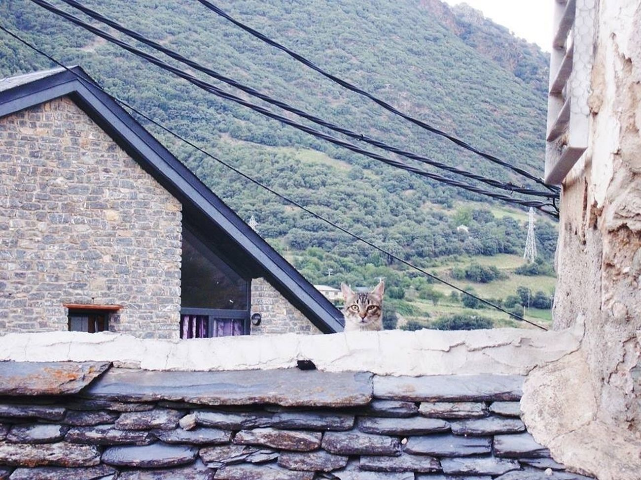 Rialp ♡ Cat Gossip Animals
