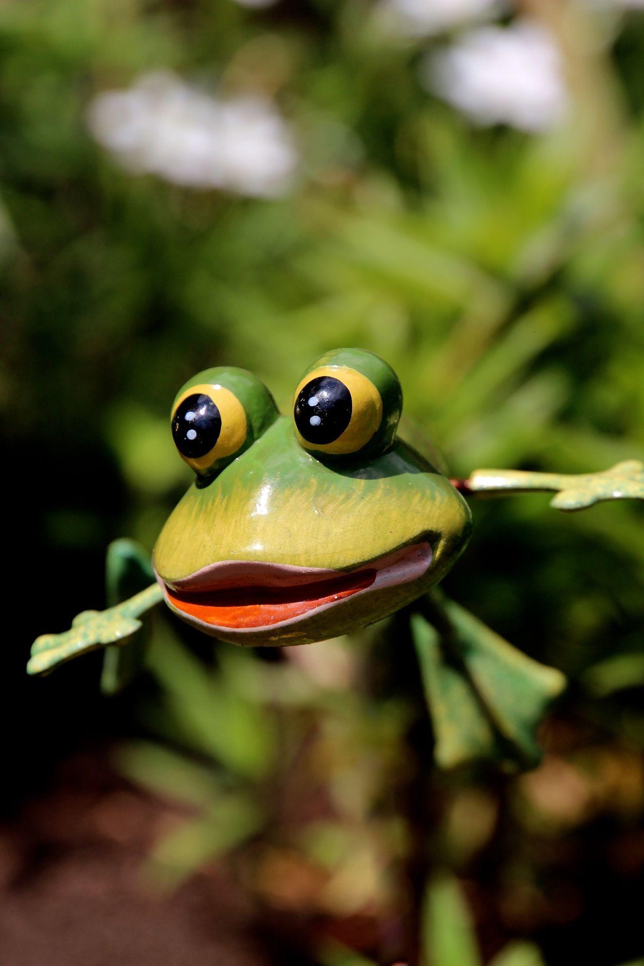 Frog Macro_collection Macroclique Secret Garden AMPt_community Macro Photography EyeEm Masterclass Getting Inspired Taking Photos EyeEm Best Shots