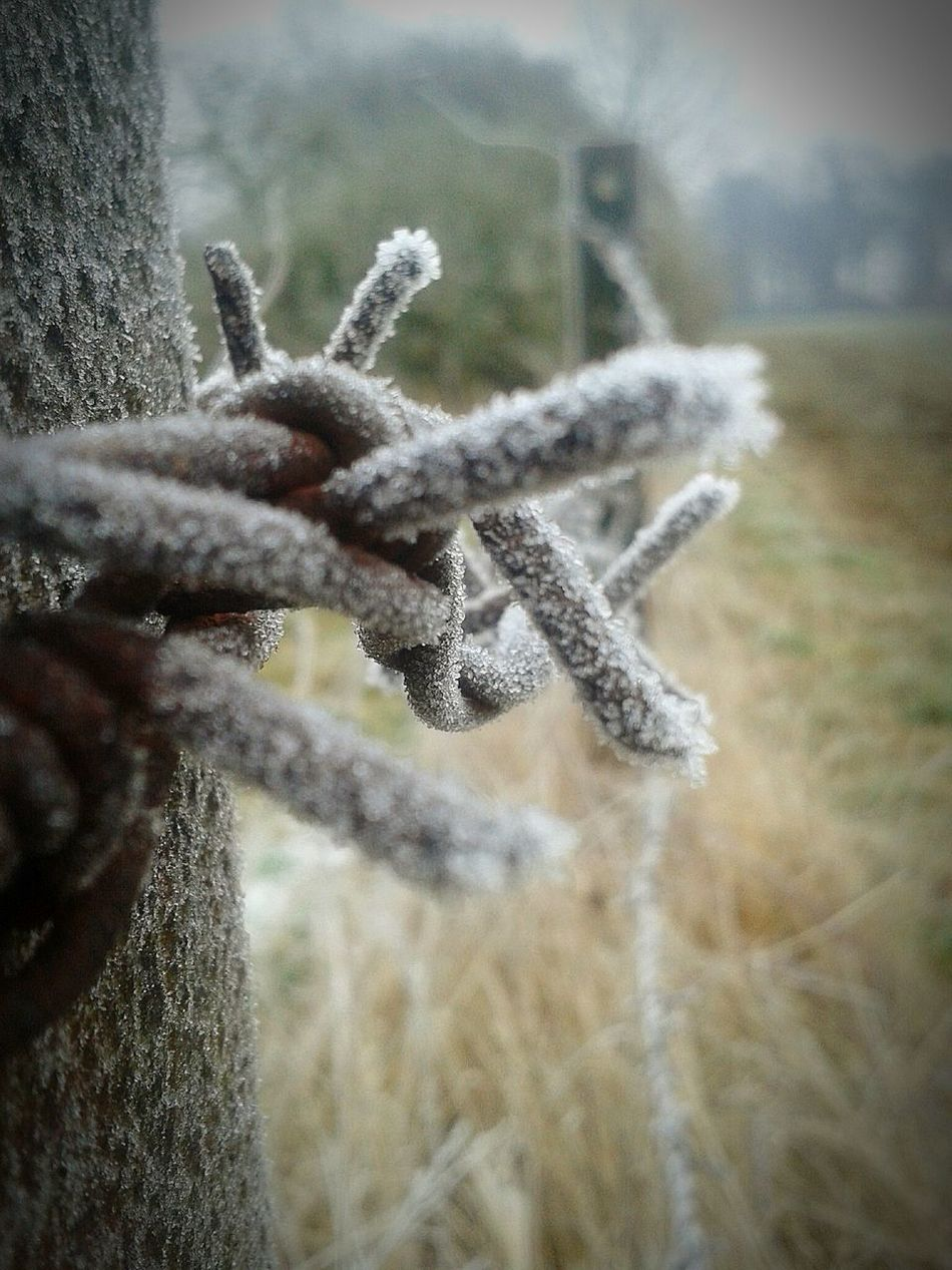 Frostiger Morgen Focus On Foreground Beauty In Nature Frost Crystals Eiskristalle Nature Outdoors Winter Cold Temperature