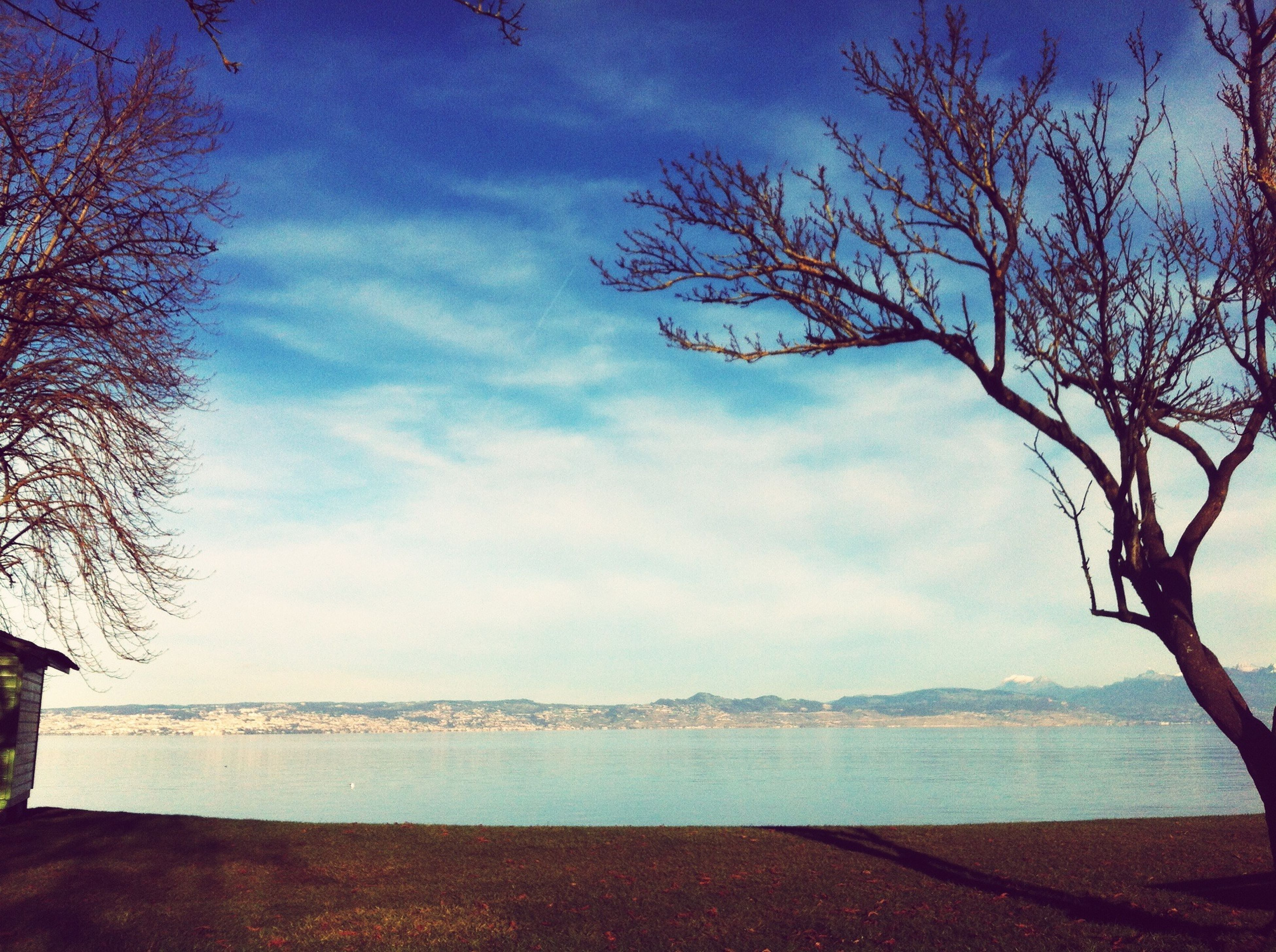 sky, water, tree, tranquil scene, tranquility, scenics, bare tree, beauty in nature, sea, branch, nature, cloud - sky, cloud, beach, horizon over water, shore, blue, idyllic, lake, tree trunk