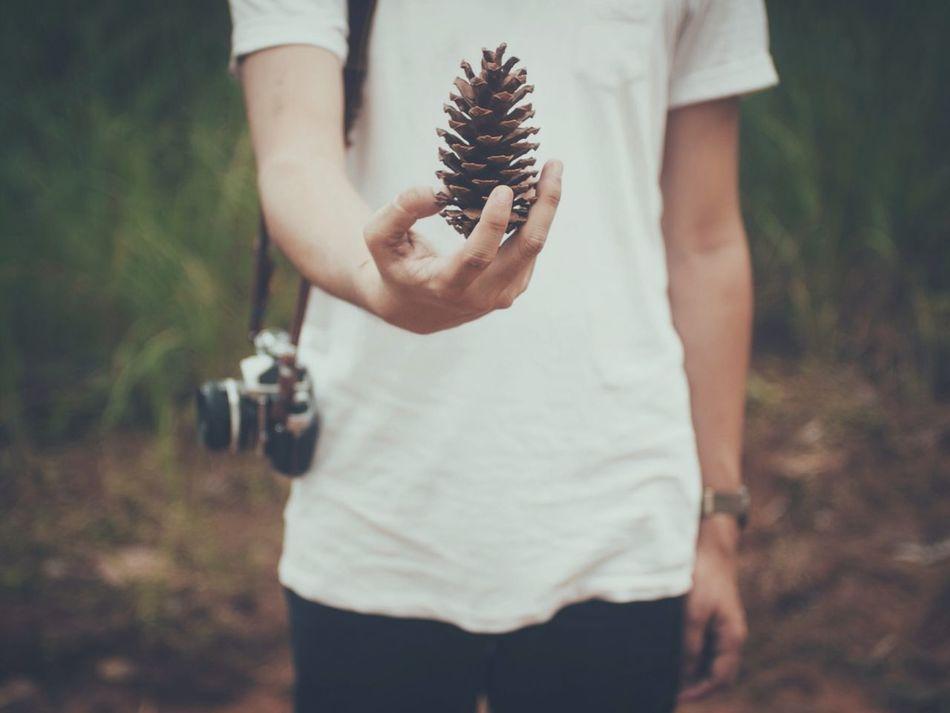 Pine Thailand_allshots Thailand_allshots_nature Mountains Forest Hand