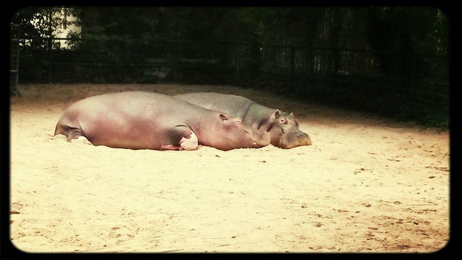In love au zoo.... La Palmyre Zoo In Love