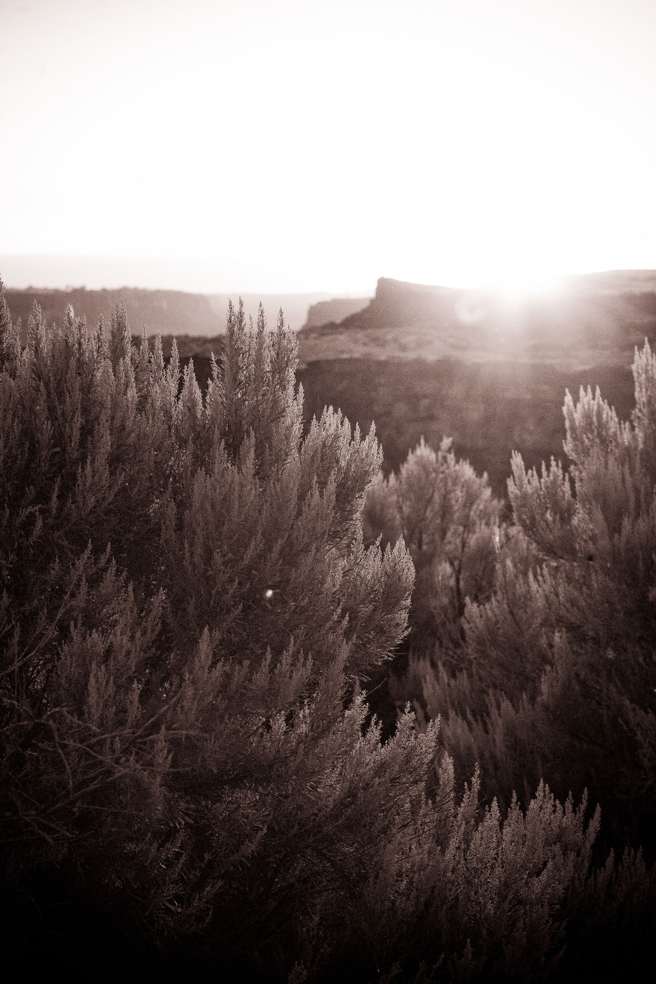 Back Backlight Backlit Sunset Beauty In Nature High Desert Idaho Landscape Monochromatic Monochrome Nature Outdoors Plant Plants Plateau Sage Scenics Sepia Sky Snake River Snake River Valley Sunset Tranquil Scene Tranquility Twin Falls Twin Falls, Idaho