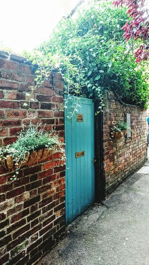 Door Closed Built Structure Entrance Building Exterior Architecture Wall - Building Feature Tree Brick Wall Plant Growth Green Color Front Door Outdoors Surrounding Wall Damaged Bad Condition Blue Day Overgrown