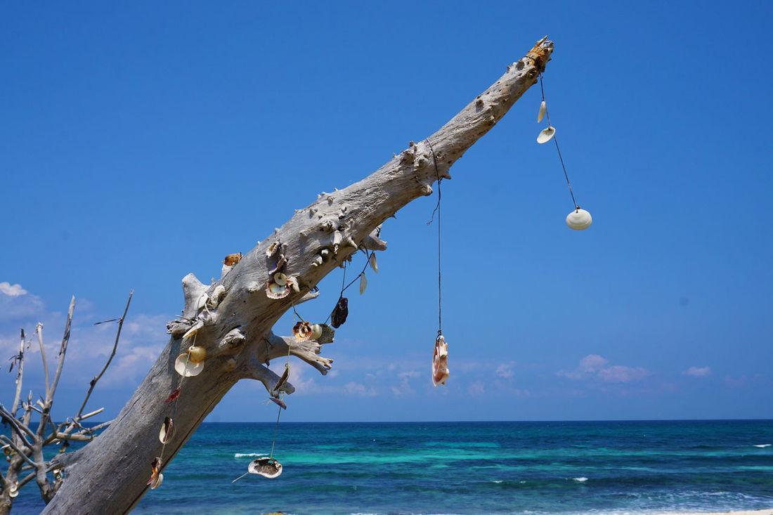 2016 Beach Beauty In Nature Blue Cancun Interior Isla Mujeres Mexico Nature Outdoors Sea Shell Sky Tree Water イスラムヘーレス メキシコ