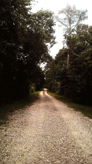 Longroadahead Trees Eyeemnaturelover Green Calmweather Rockyroad Fresh Rockystreet On The Road The Adventure Handbook
