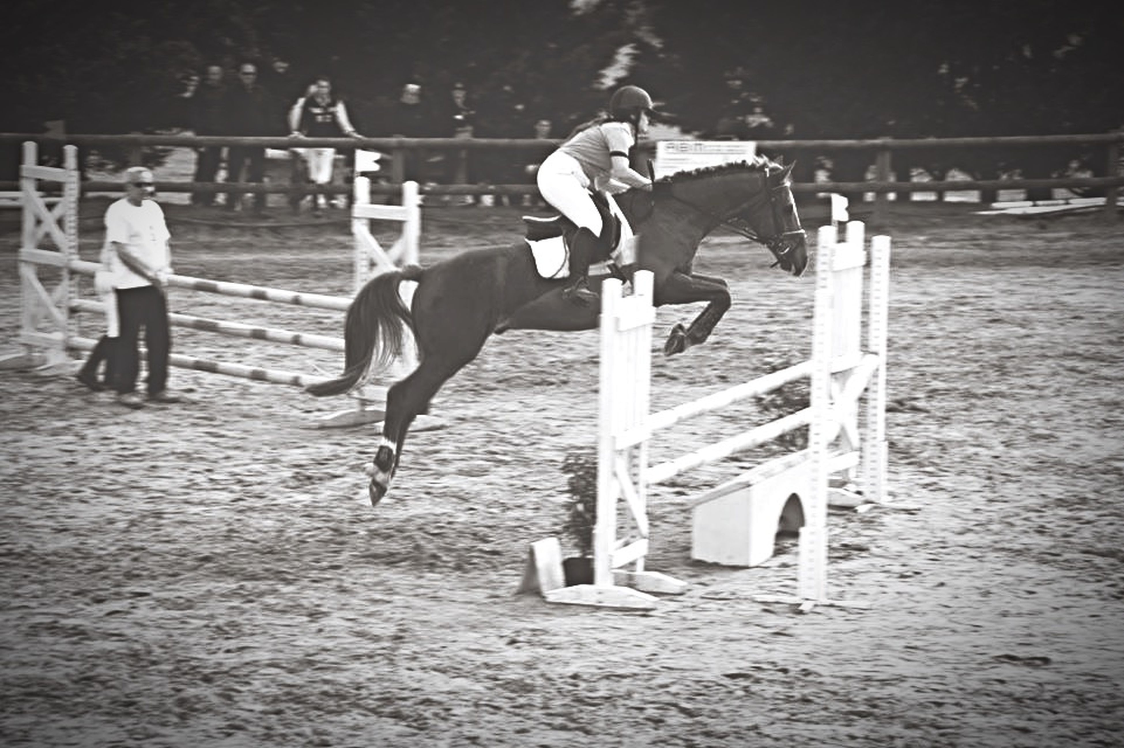 Fly Love Is In The Air Beautiful Concours CSO Club1 Horse