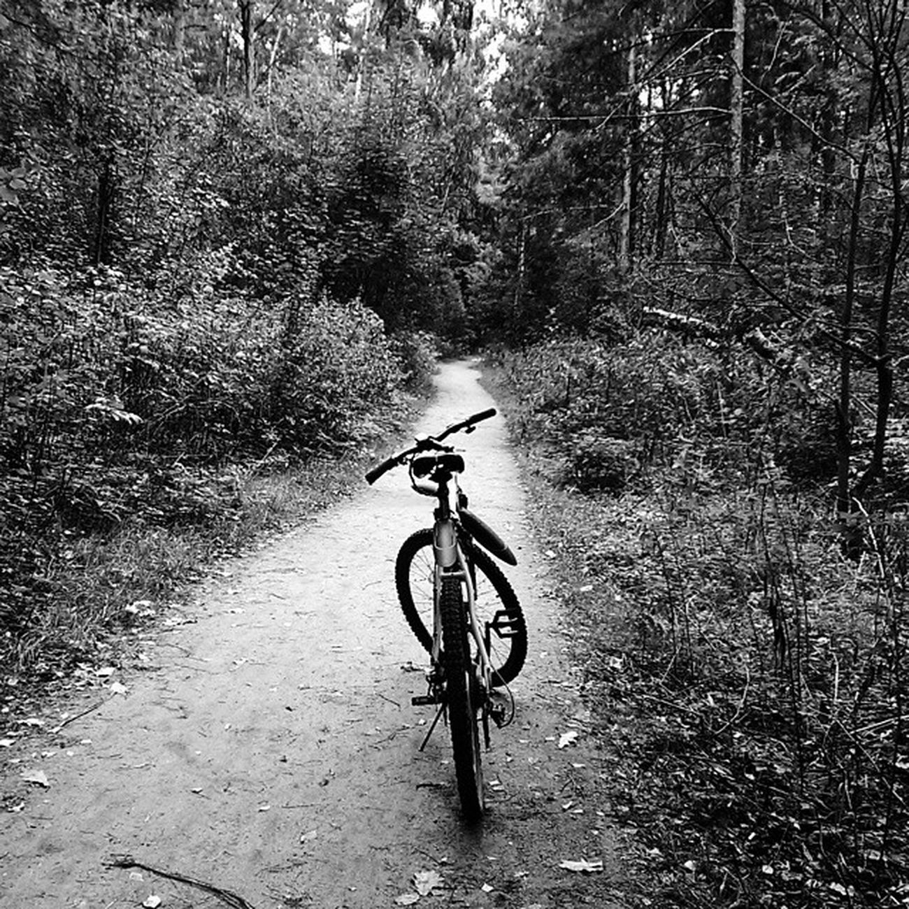 Vscocam VSCO Vscomafia Like likeit bike russia black and white forest wood followme follow autumn road instamark instasize