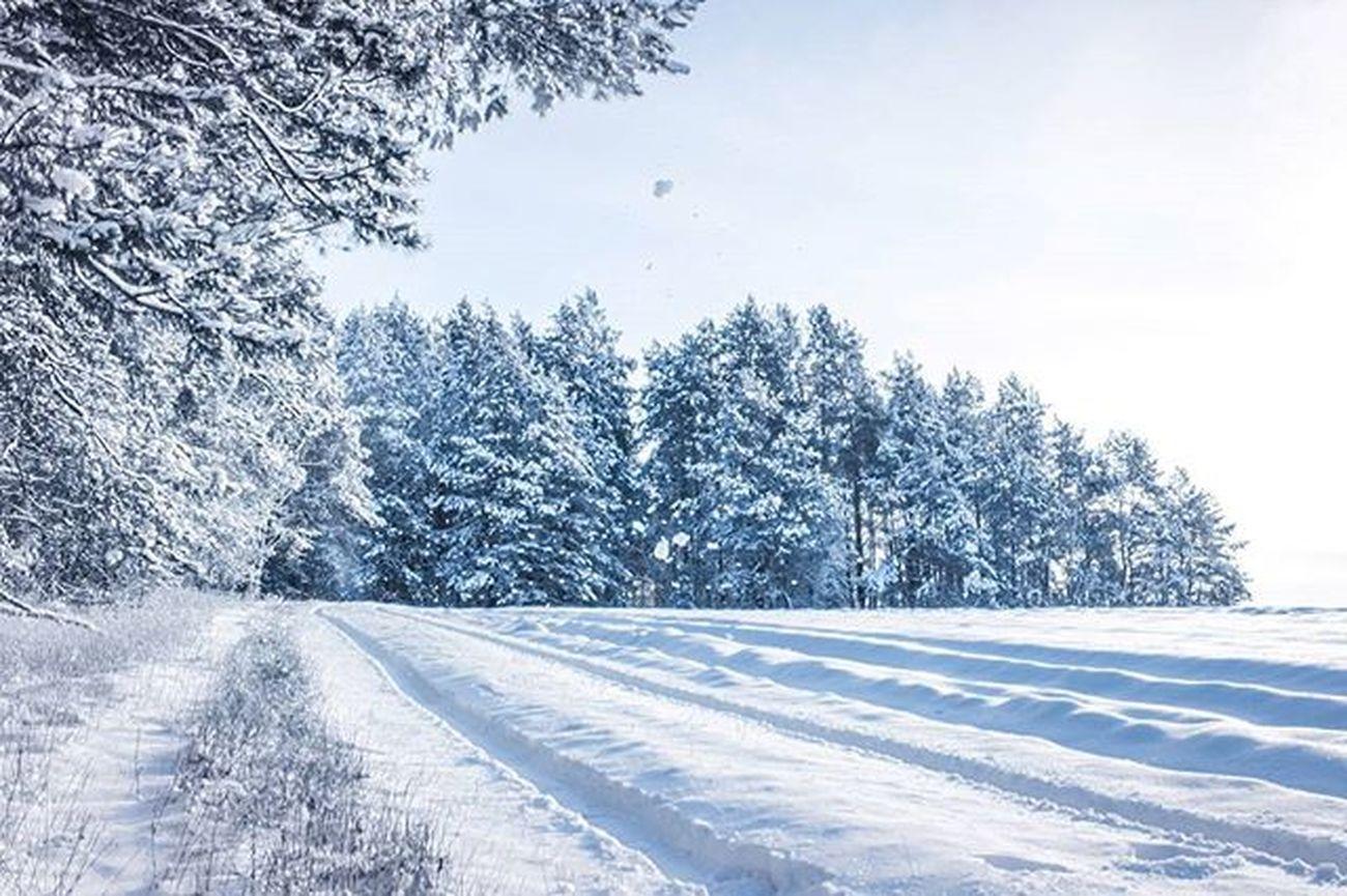 беларусь Природа зима снег Лес небо январь Дорога снегидет Belarus Nature Photo Lusienka_pilets Winter Canon Morning Snow Road Sky Snow