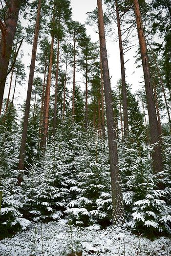 Winter Winter Trees Winter Wonderland Nature_collection EyeEm Nature Lover Nature Trees Forest