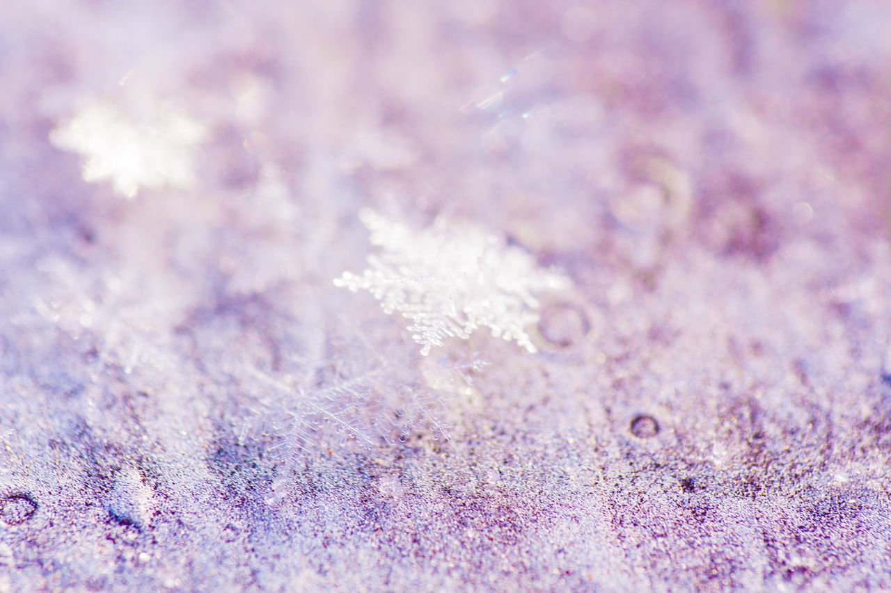 Winter Snow Snowflake Cold Temperature Frost Close-up Frozen Ice Abstract Backgrounds Abstract Nature Ice Crystal No People Beauty In Nature Backgrounds Tree Snowing Outdoors Day