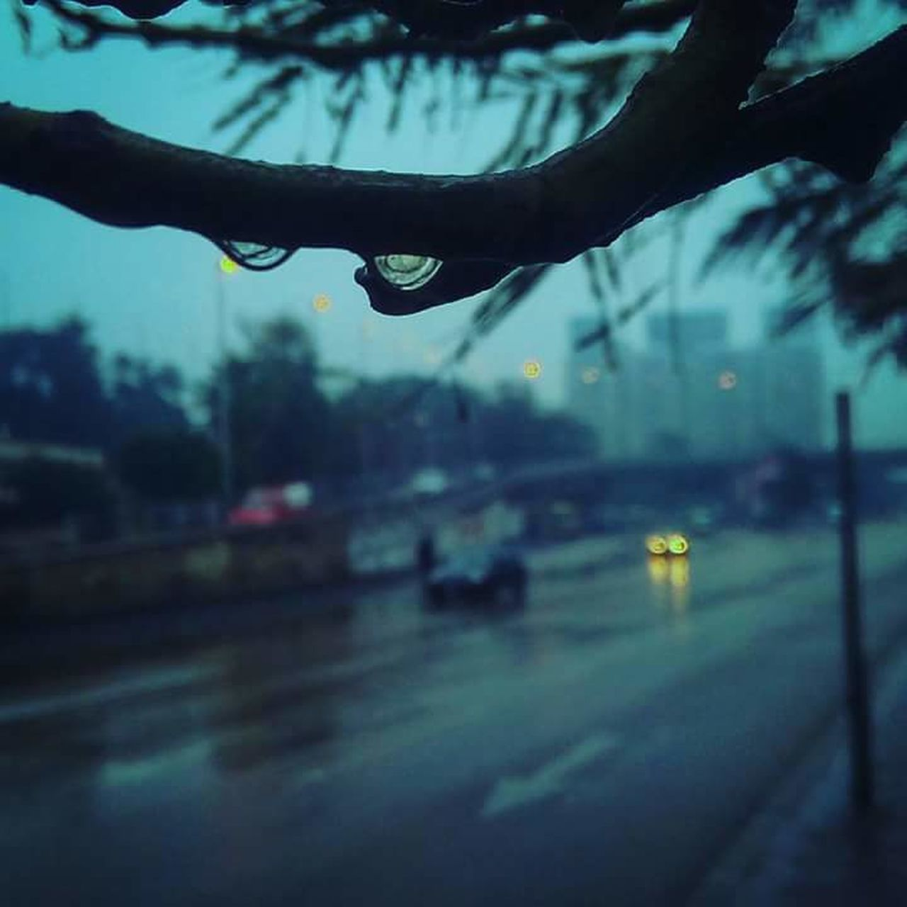 reflection, wet, rain, sky, tree, water, drop, focus on foreground, dusk, transportation, close-up, rainy season, outdoors, city, day, human body part, nature, human hand, people