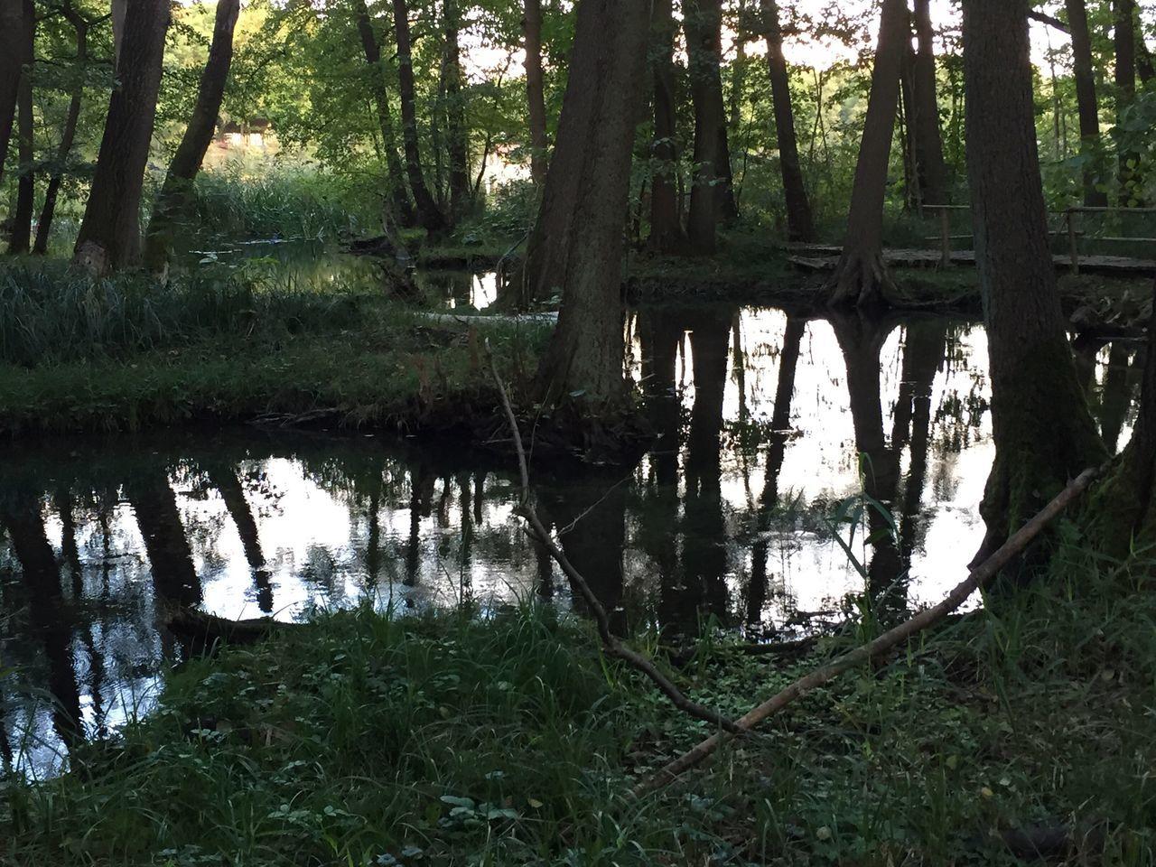 Schwarzerlenbruch am Buckower See ... Märkische Schweiz Brandenburg Natur Spiegelung