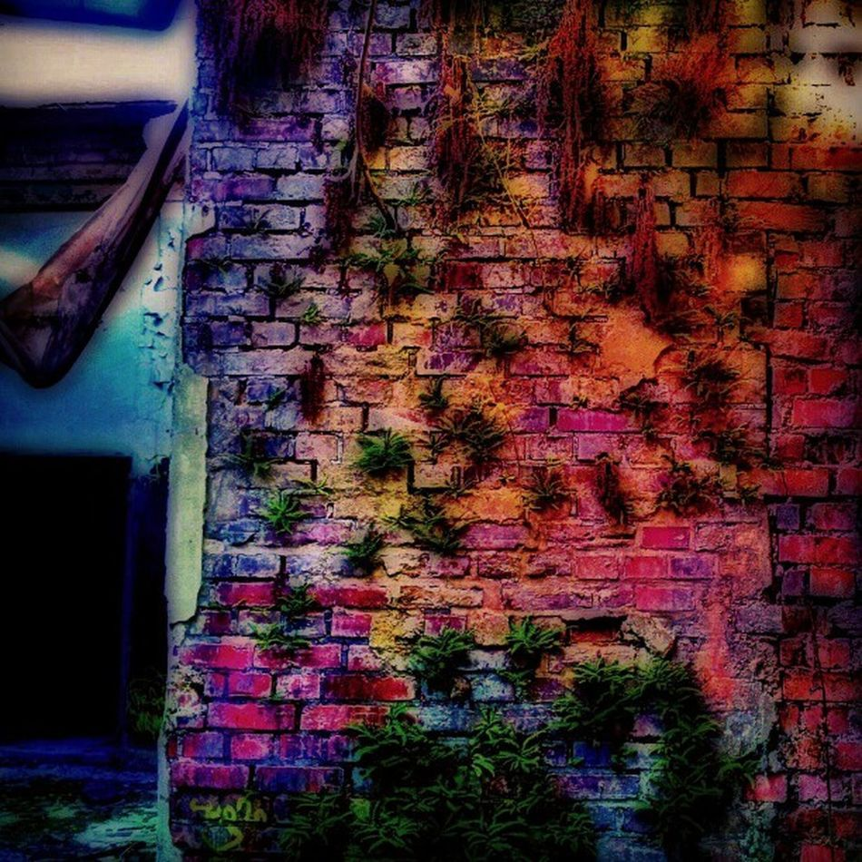 The best #brickporn is when.mother #nature takes back what is and ever was hers. Filthyfeeds Organisedgrime Grime Abandonedbuilding Urbanexploration 50shadesofgrime Findingbeautyoutofshit Sutroalwayswins Lostplaces Filthyfamily Urbanex Brickporn Nature Rottenfeed Abandoned Igdungeon Derelict Sfx_urbex Decay Lostplace Photowall Detailsofdecay Rotten Beautymess Urbex Lostinplace Partnersingrime Beautifuldecay