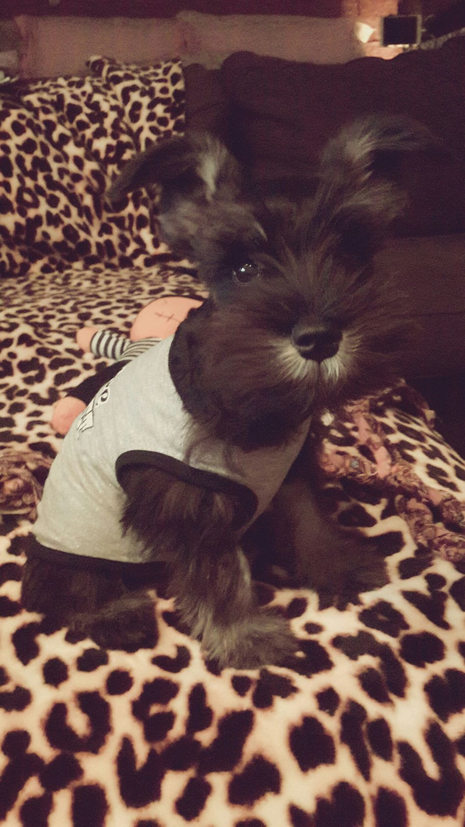 My mommy spoiling me rotten ..I am telling you.. ^_^ So Cute :) I Love My Dog My Pet I Love It ❤ I Love You ❤ Check This Out So Adorable