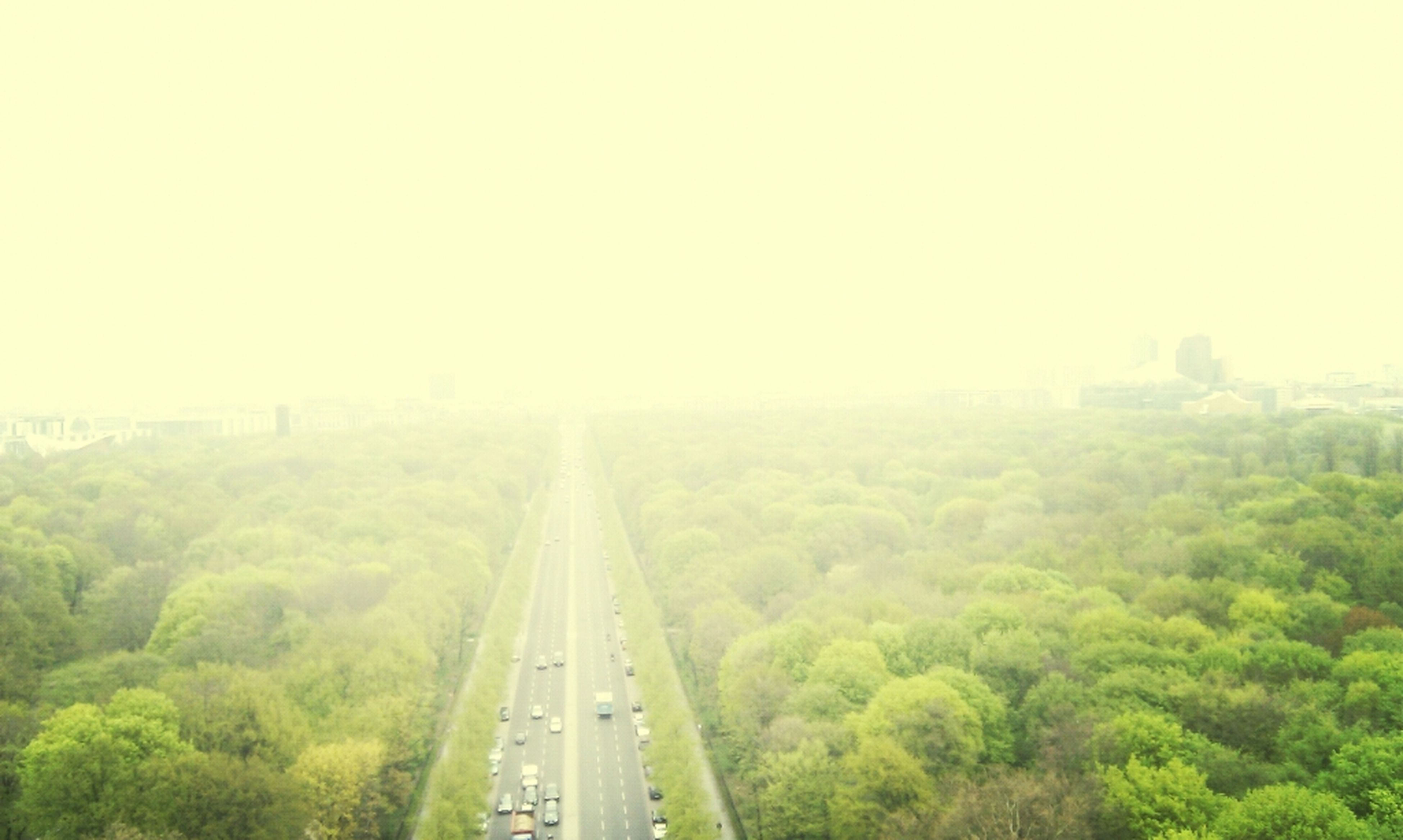 transportation, tree, fog, the way forward, high angle view, green color, diminishing perspective, vanishing point, foggy, road, growth, landscape, nature, copy space, tranquility, tranquil scene, day, beauty in nature, outdoors