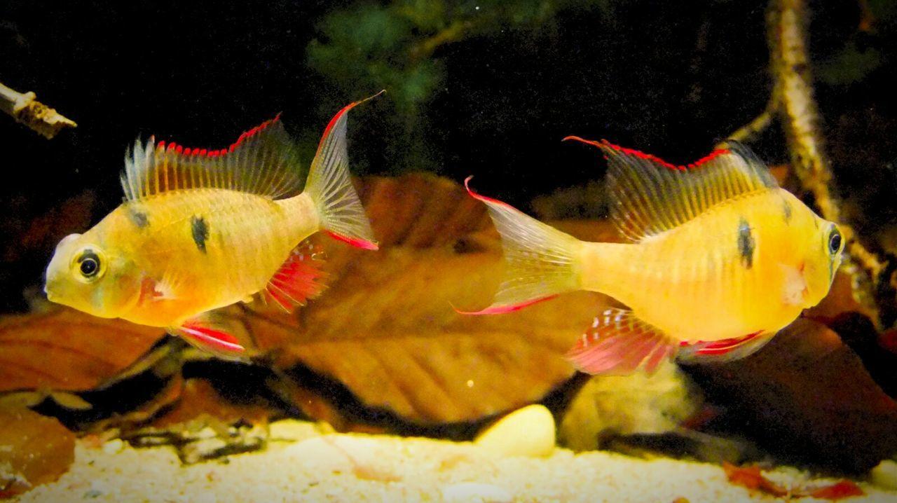 Fische Fish Aquariums Aquarium! Aquarium Fish Aquariumlife Aquariumfish Aquarium Life Aquaristik Fisch