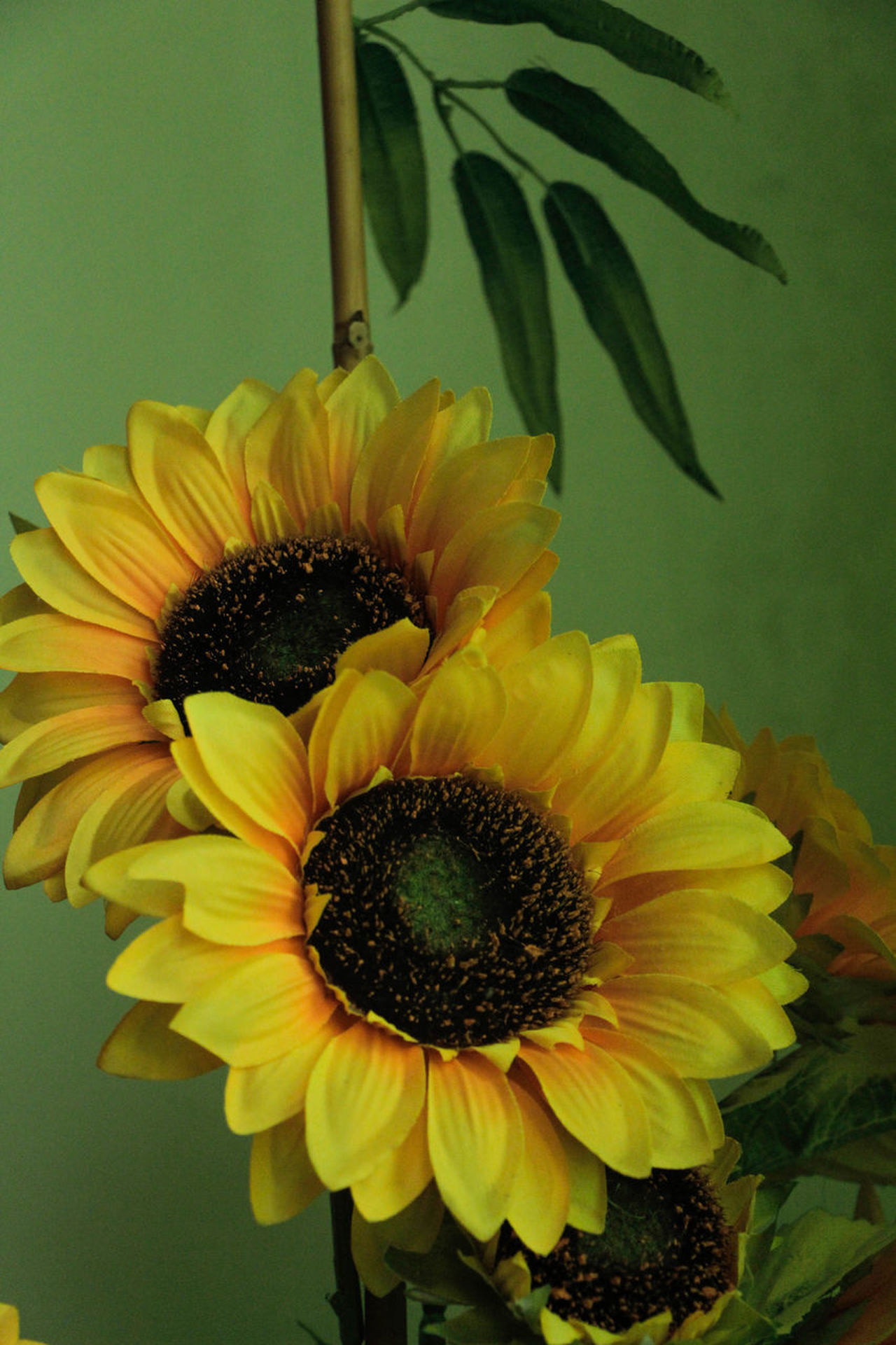 Artificial Artificial Flower Blooming Close-up Fake Flower Flower Head Growth Indoors  Petal Plant Sunflower Yellow