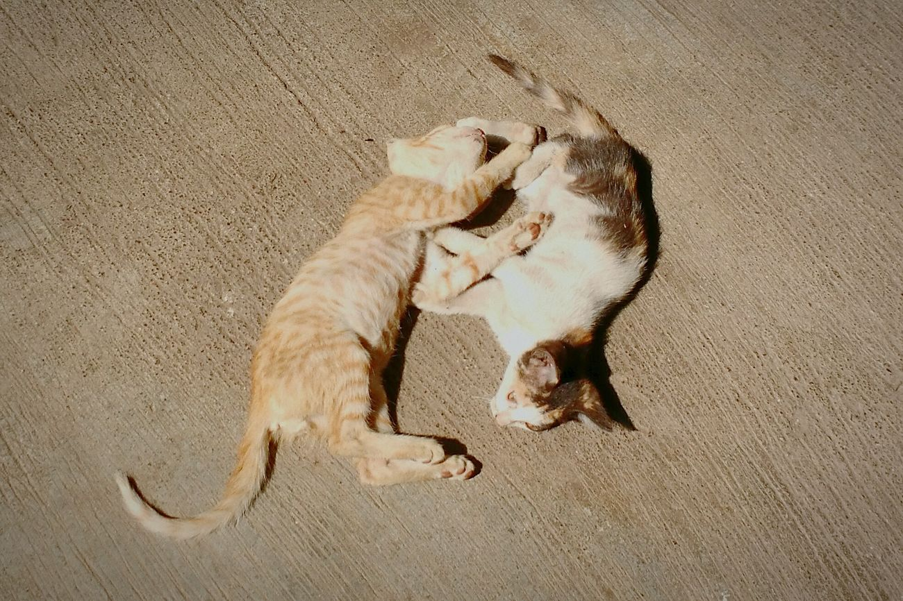 The CatYin-yang Party! First Eyeem Photo