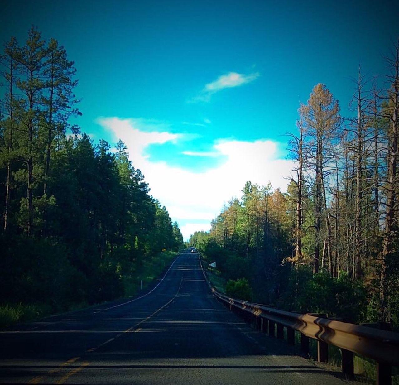 Arizona Sedona Oak Creek Canyon Flagstaff Life Is A Highway All Paths Lead To Somewhere Road Trip Travels Trees Roadway Greenery Scenic Shrubery Roadside