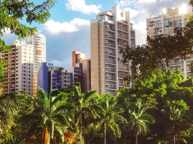 My dear friends! My beautiful city of Goiania, capital of Goias State. Happy life for all! Trees TreePorn Landscape_Collection Landscape Goiânia